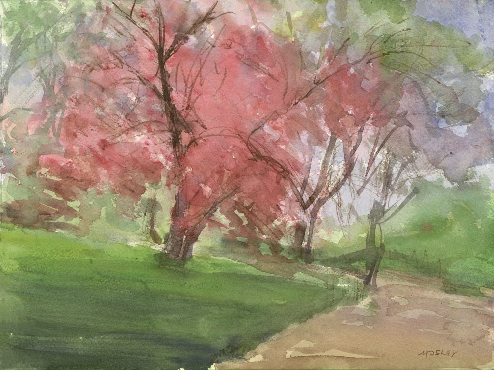 Cherry Blossom, Central Park