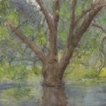 Tree at Mallard Lake
