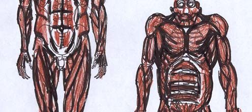Human and Chimp Anatomy